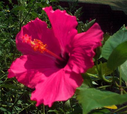 heat wave and keeping flowers alive phyllis dobbs blog. Black Bedroom Furniture Sets. Home Design Ideas