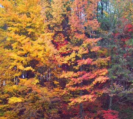 Yellow and red fall foliage