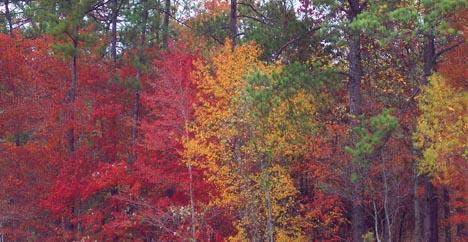 Red and orange fall foliage