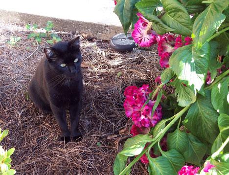 Phyllis Dobbs' cat 1