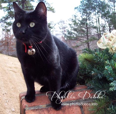 My black kitty Phyllis Dobbs