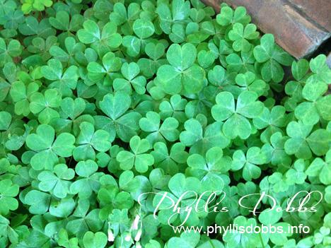 St. Patrick's Day Shamrock patch Phyllis Dobbs