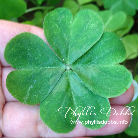 4 leaf clover on St. Patrick's Day